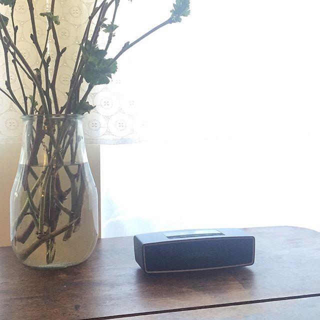 娘がクラシック音楽を熱心に聴いているので、スピーカーを買いました。いい音が流れているだけで、部屋が違う空間になります。#BOSE サウンドリンク ミニ Bluetooth スピーカー II
