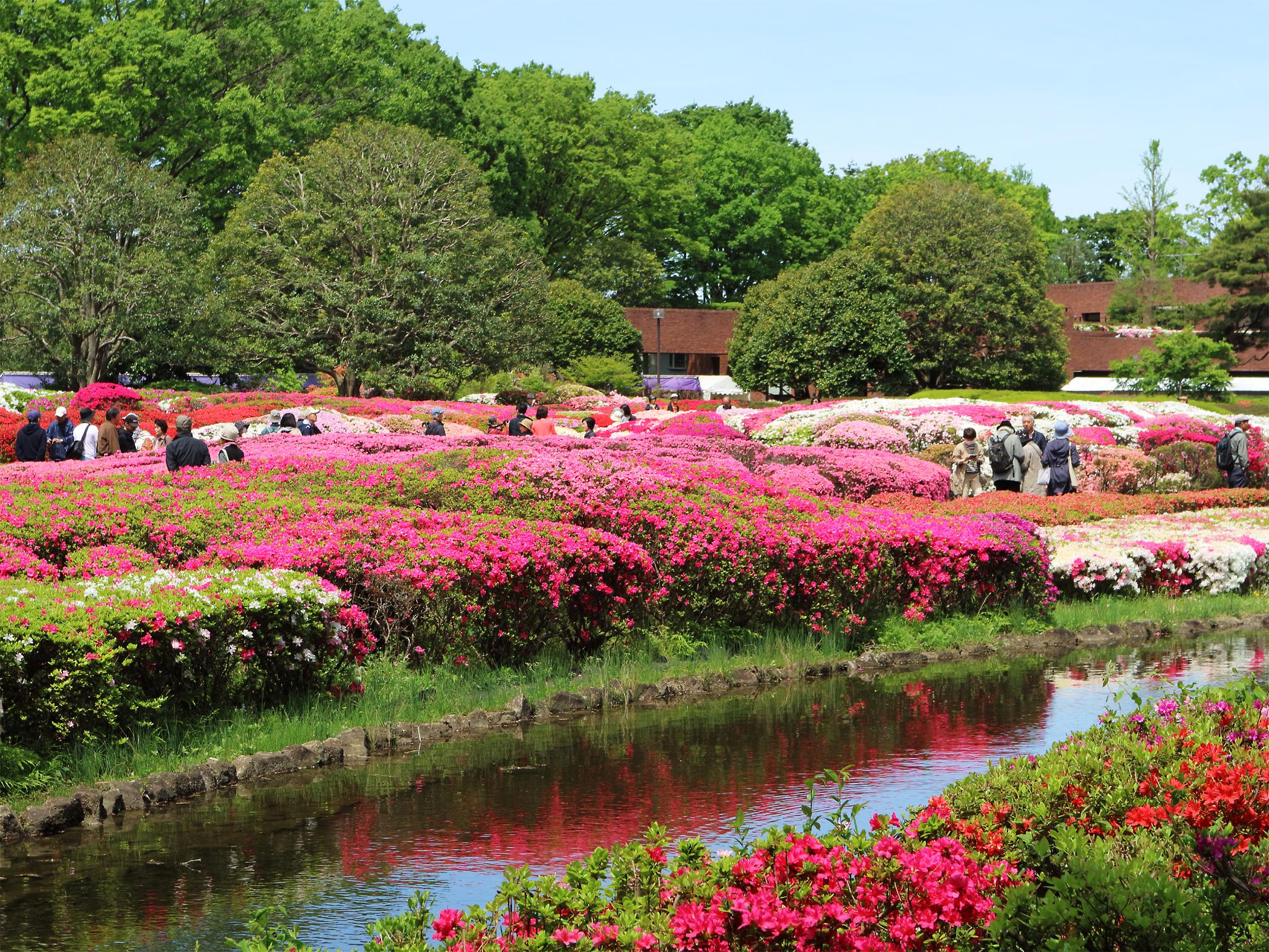 神代植物公園 ツツジ園